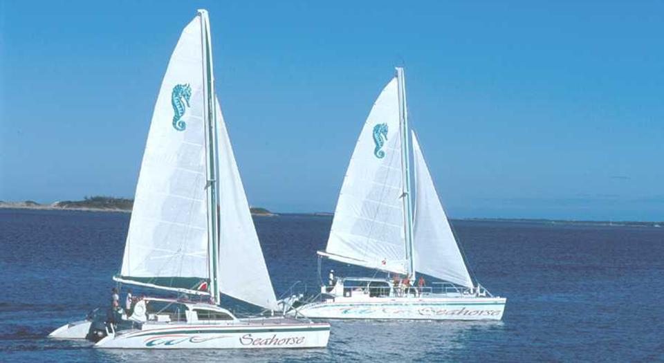 seahorse-sailing-adventures