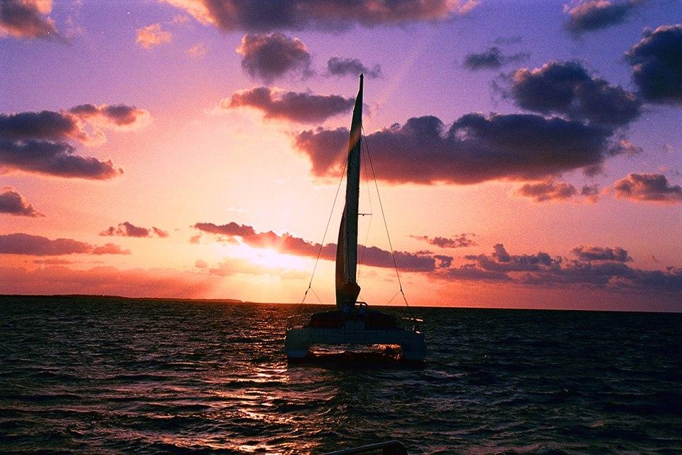 Seahorse sunset 2